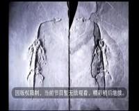貴州新聞聯播2019-11-25