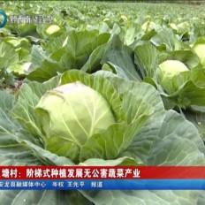 安龍幺塘村:階梯式種植發展無公害蔬菜產業