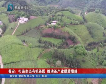 普安:打造生態有機茶園 推動茶產業提質增效