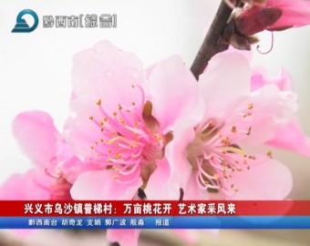 興義市烏沙鎮普梯村:萬畝桃花開 藝術家采風來